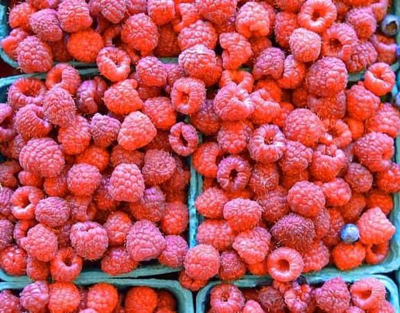 i flavonoidi modificano il microbiota intestinale